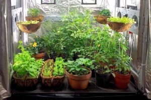 grow-tent-10x10......